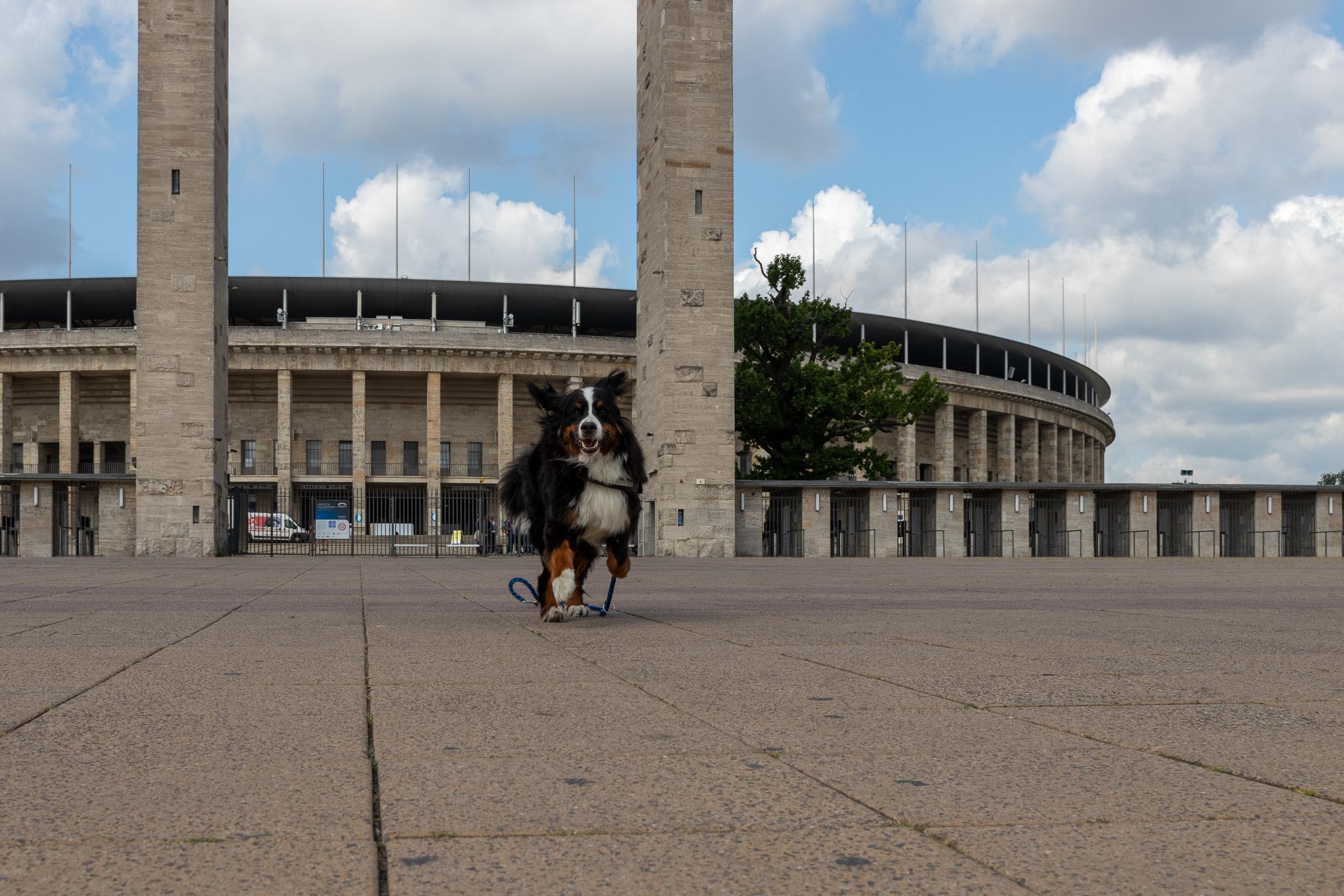 Berlin Omypia Stadion Sam rennt