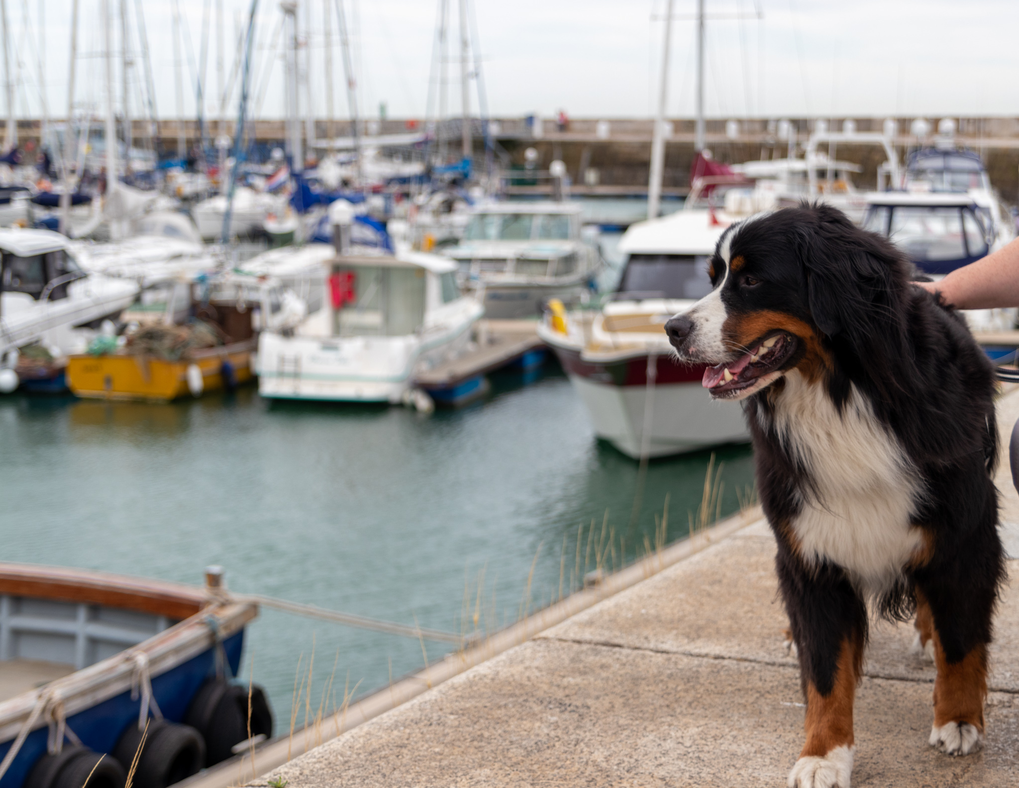 Ramsgate Hafen mit Hund